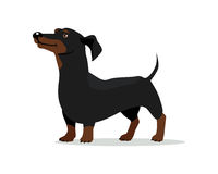 Ejemplo plano del diseño del vector del perro basset libre illustration