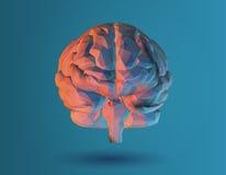 Ejemplo polivinílico bajo del cerebro 3D en fondo azul Imagen de archivo libre de regalías