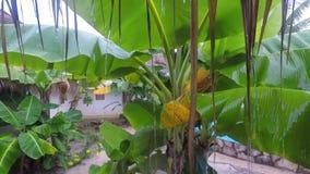 Ejemplo polivinílico bajo del concepto de la flor amarilla hermosa Modelo inconsútil del tulipán Modelo polivinílico bajo del dis metrajes