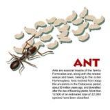 Ejemplo real del insecto de la hormiga Imágenes de archivo libres de regalías