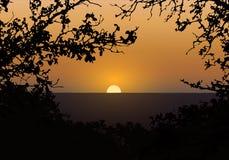 Ejemplo realista de la puesta del sol en el cielo de igualación anaranjado Silueta de las ramas y del paisaje de árbol con el bos ilustración del vector