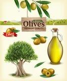 Ejemplo realista de las aceitunas de la fruta, aceite de oliva, rama de olivo, olivo, granja verde oliva del vector Etiqueta de a imagen de archivo