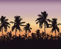 Ejemplo realista de un cielo anaranjado de la púrpura del bosque de la palma con el espacio para el texto, vector libre illustration