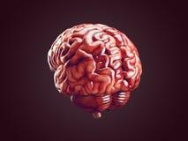 Ejemplo realista del cerebro Imagen de archivo libre de regalías