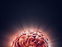 Ejemplo realista del cerebro Imágenes de archivo libres de regalías