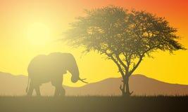 Ejemplo realista del paisaje africano con safari, el árbol y el elefante debajo del cielo anaranjado con el sol naciente Sol y ra stock de ilustración
