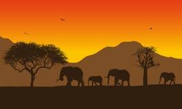 Ejemplo realista del paisaje africano con safari, los árboles y la familia de elefantes debajo del cielo anaranjado con el sol na stock de ilustración