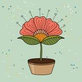Ejemplo rojo de la flor Imagen de archivo