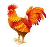 Ejemplo rojo del gallo Foto de archivo