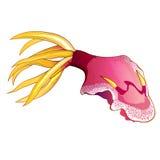 Ejemplo rosado del calamar Imagenes de archivo