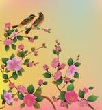 Ejemplo Sakura del vector postal Fotografía de archivo