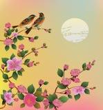 Ejemplo Sakura del vector postal Imagen de archivo