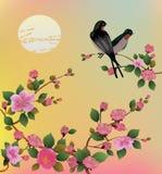 Ejemplo Sakura del vector postal Fotos de archivo