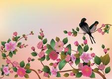Ejemplo Sakura del vector postal Foto de archivo libre de regalías
