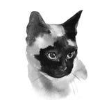 Ejemplo siamés de Cat Hand Drawn Pet Portrait de la acuarela aislado en blanco Imagen de archivo libre de regalías