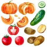Ejemplo, sistema, imagen de verduras, tomates, patatas, calabaza y pepino de la acuarela Imagenes de archivo