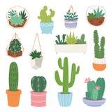 Ejemplo suculento cactiforme lindo en conserva de la botánica de la planta de los cactus botánicos de la historieta del vector de stock de ilustración