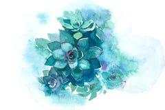 Ejemplo suculento de la acuarela de la flor de la planta del áloe del cactus stock de ilustración