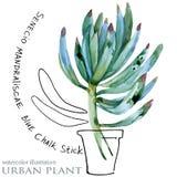 Ejemplo suculento de la acuarela de la planta libre illustration