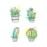 Ejemplo suculento El sistema dibujado mano del cactus del vector con la pintura salpica Cactus y en plantas de la puerta en potes Fotografía de archivo