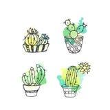 Ejemplo suculento El sistema dibujado mano del cactus del vector con la pintura salpica Cactus y en plantas de la puerta en potes Imágenes de archivo libres de regalías