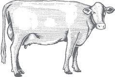Ejemplo superior de la vaca del grabar en madera del vector Fotos de archivo libres de regalías