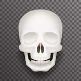 Ejemplo transparente aislado cráneo humano realista del vector del diseño del fondo de la maqueta realista de la moda 3d libre illustration