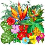 Ejemplo tropical del vector del jardín botánico de la naturaleza libre illustration