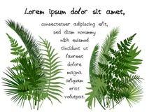 Ejemplo tropical verde del vector de las hojas Foto de archivo libre de regalías