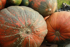 Ejemplo a un artículo acerca de una forma de vida sana, vegetariano Imagenes de archivo