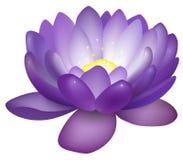 Ejemplo violeta de la flor de loto Imagenes de archivo