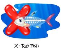 Ejemplo X de la historieta de los pescados de la radiografía de la letra Fotos de archivo