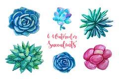 Ejemplos de la acuarela - clipart de los succulents Todos los elementos son Fotografía de archivo libre de regalías