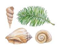 Ejemplos de la acuarela de cáscaras stock de ilustración