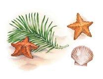 Ejemplos de la acuarela de cáscaras y de estrellas de mar ilustración del vector