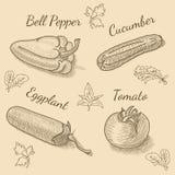 Ejemplos de las verduras del vector para el menú del restaurante Foto de archivo