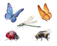 Ejemplos de los insectos de la acuarela Imágenes de archivo libres de regalías