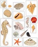 Ejemplos de mejillones y del caballo de mar Imágenes de archivo libres de regalías