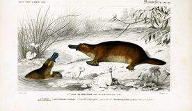 Ejemplos del animal imagenes de archivo
