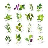 Ejemplos del clip art de hierbas y de especias Imagen de archivo