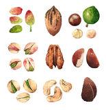 Ejemplos del clip art del Watercolour de nueces y de semillas Imagen de archivo