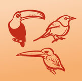 Ejemplos del pájaro del vector en un fondo anaranjado