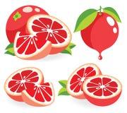 Ejemplos del vector de los pomelos rosados Fotos de archivo libres de regalías