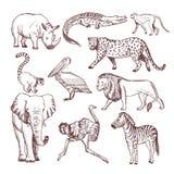 Ejemplos dibujados mano de animales africanos stock de ilustración