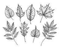 Ejemplos dibujados mano del vector Sistema de hojas de la caída Imagen de archivo
