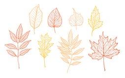 Ejemplos dibujados mano del vector Sistema de hojas de la caída Desi del bosque Fotografía de archivo libre de regalías
