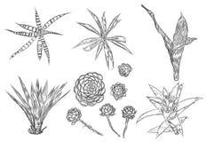 Ejemplos lindos del cactus Sistema hecho a mano Cact dibujado mano del esquema Fotos de archivo