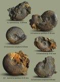Ejemplos para el libro en la paleontología Fotografía de archivo libre de regalías