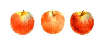 Ejemplos rojos de la acuarela de la manzana Fotografía de archivo libre de regalías