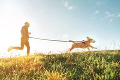 Ejercicios de Canicross Funcionamientos del hombre con su perro del beagle Actividad del deporte al aire libre con el animal domé imagen de archivo libre de regalías